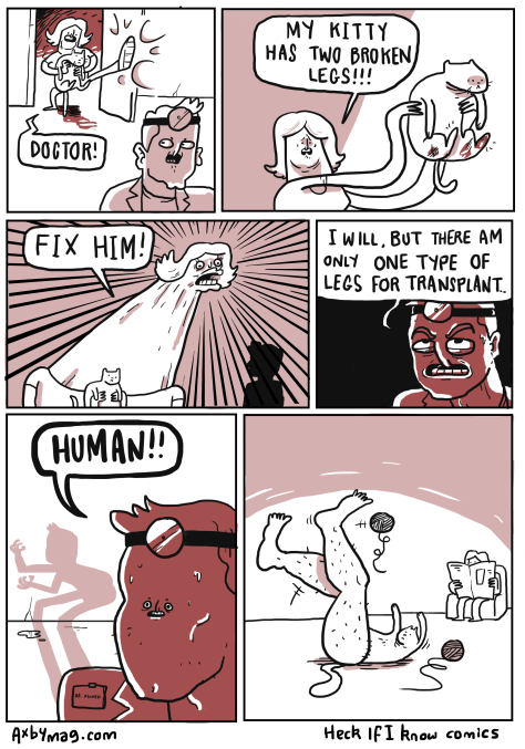 cat_leg